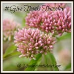 GiveThanksThursday_zpsf65533ce