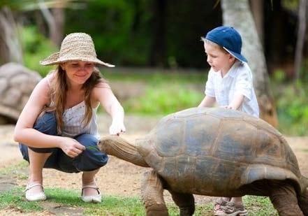 Mauritius Animals