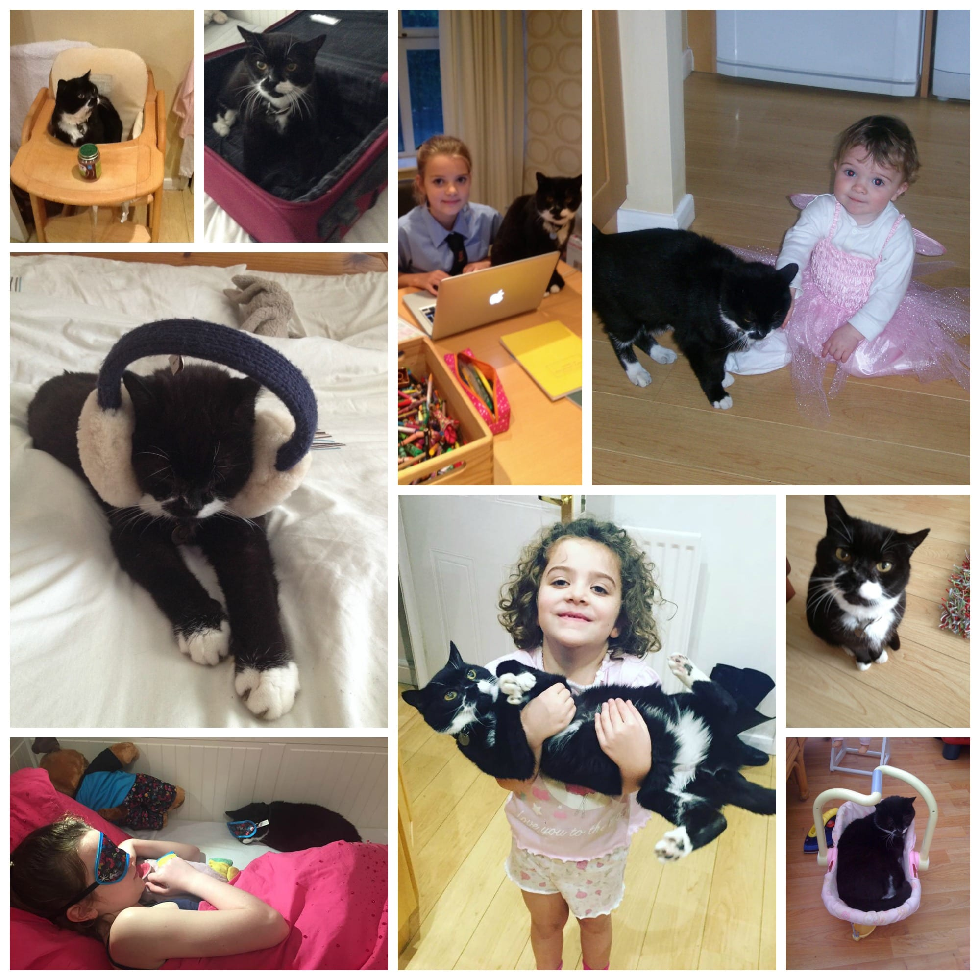 Pet collage