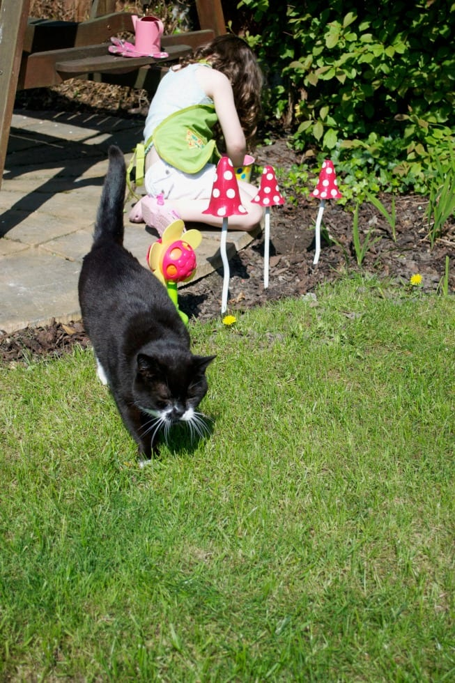 Darren cat garden